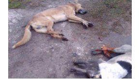 Al menos seis perros fueron envenenados en una localidad platense