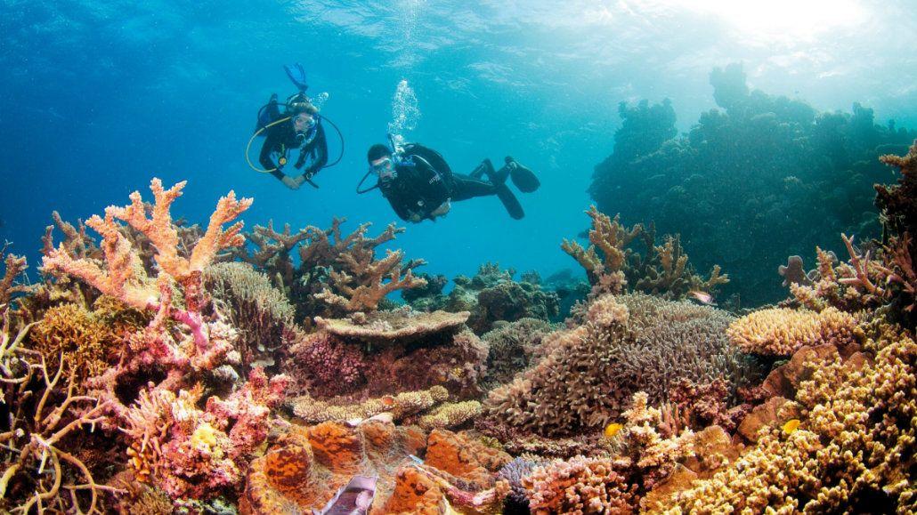 La Gran Barrera es una formación de corales única en el mundo