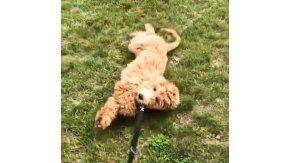 Lo sacó a pasear, pero estaba cansado y tuvo que arrastrarlo