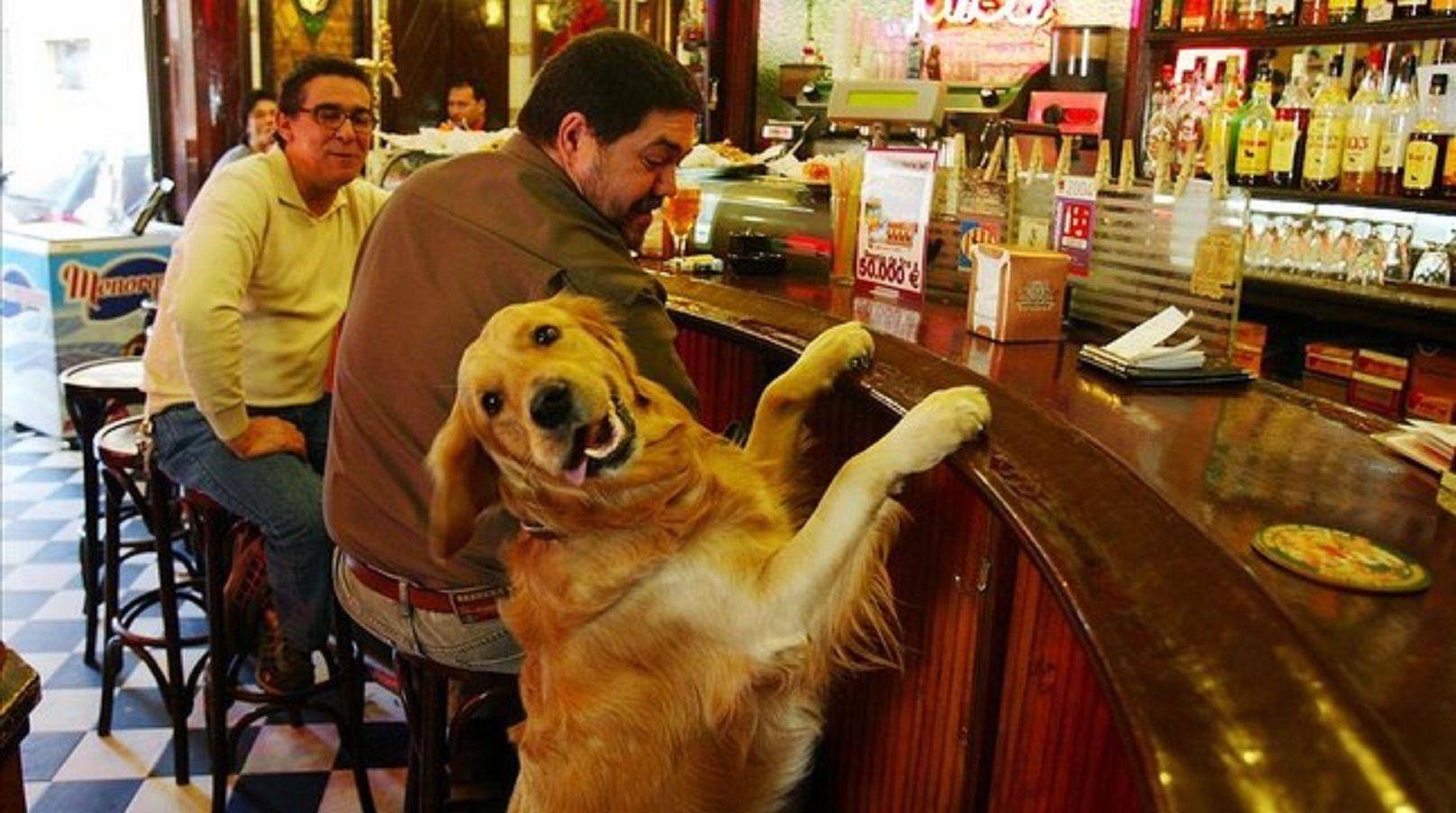 Los porteños le dijeron no a las mascotas en los restaurantes