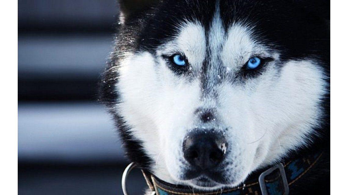 ¿Qué le hicieron? La increíble imagen de un perro después de un corte de pelo