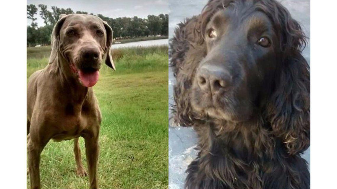 Le robaron la camioneta junto a sus perros y pide que se los devuelvan