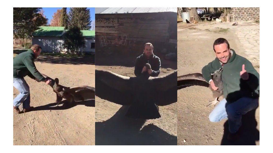 VIDEO: La verdadera historia del cóndor que se volvió viral
