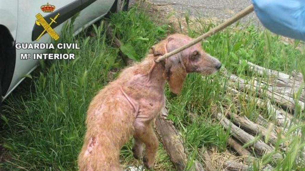 Las autoridades rescataron a 15 perro desnutridos y enfermos