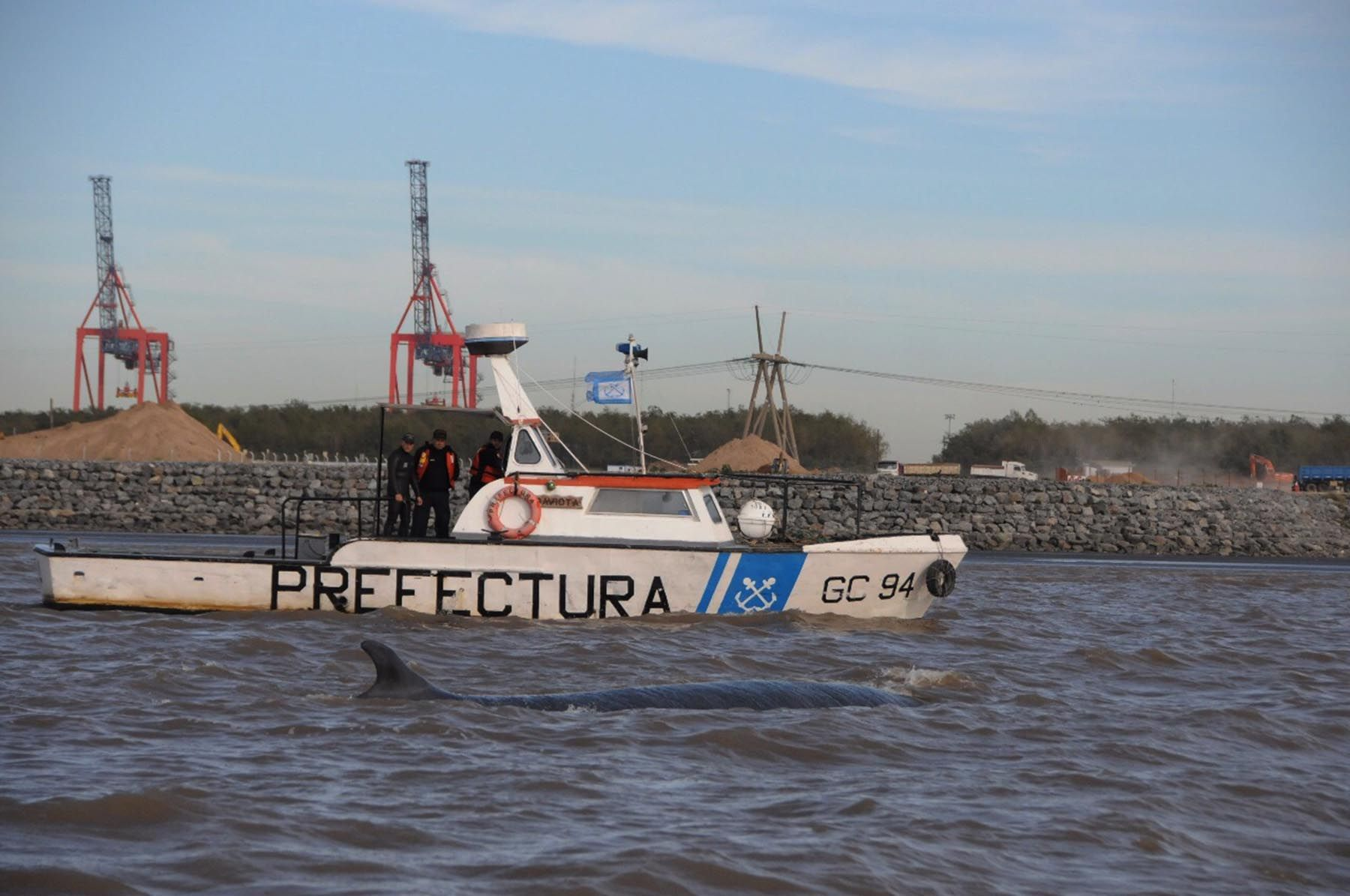 La ballena encallada en Dock Sud sigue viva pero sin poder liberarse