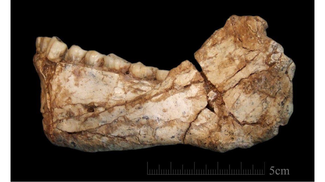 Hallaron en Marruecos los restos de Homo Sapiens más antiguos