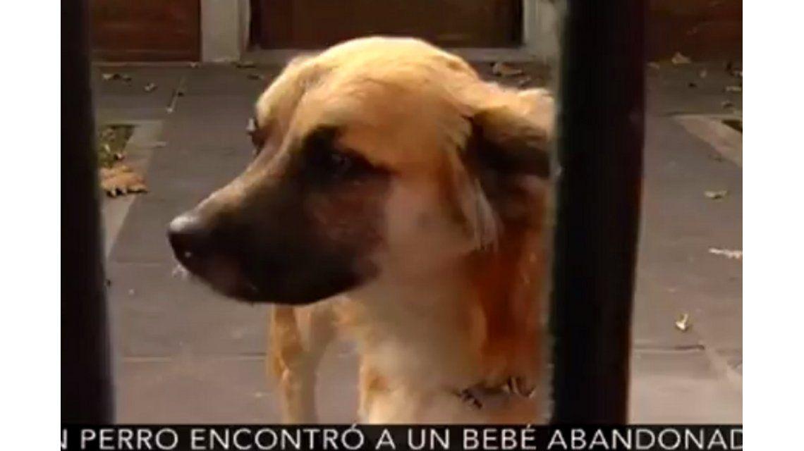 La historia de Orejón, el perro que le salvó la vida al bebé abandonado