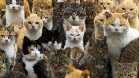 Un asesino en serie envenenó a más de 200 gatos