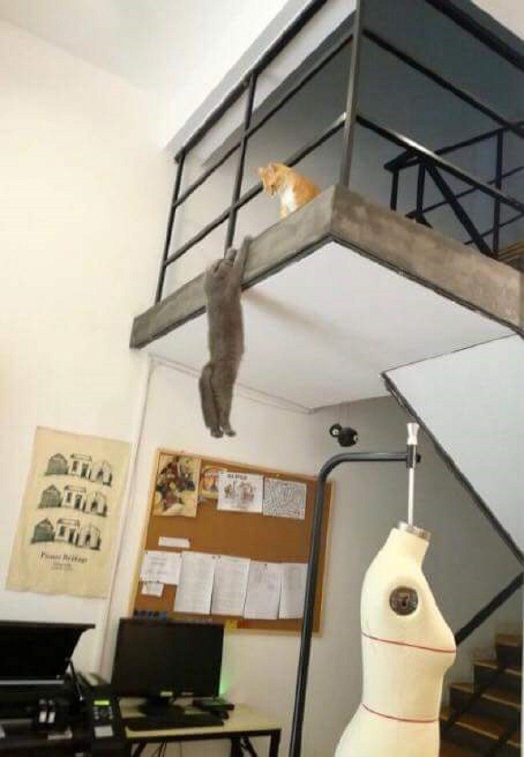 Una foto que recrea una escena de El Rey León se vuelve viral