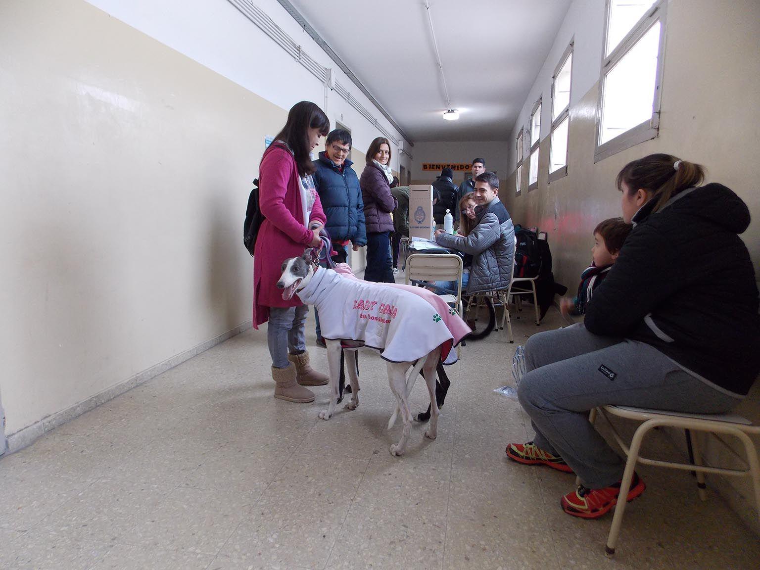 La Pampa: fue a votar con dos perras galgo para protestar por la prohibición de carreras