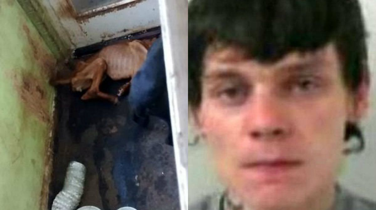 Cook fue sentenciado a cárcel en el Reino Unido por maltrato animal