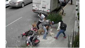 video: un pitbull ataca a una mascota y a su dueno