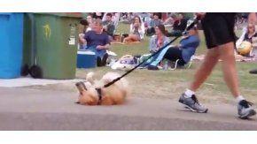 Un perro que no quería irse de la plaza se volvió viral