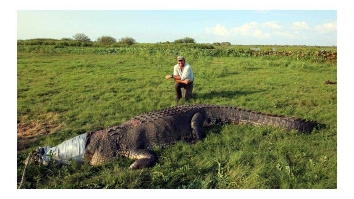 Australia: la foto de un cocodrilo gigante generó un debate viral