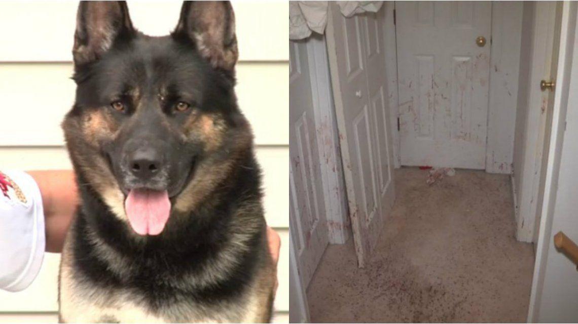 El perro defendió la casa mientras su familia estaba afuera