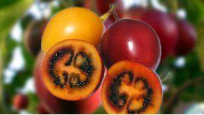 las 5 frutas del norte argentino que no vas a encontrar en la verduleria