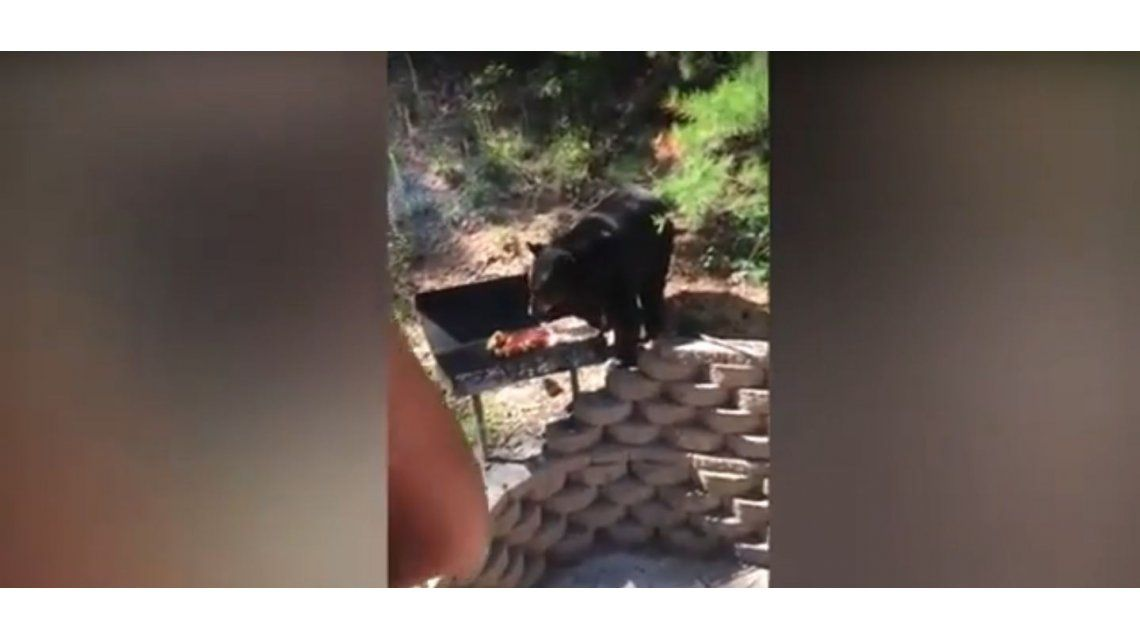 Un oso quiere robarles la carne de la barbacoa y ellos le hacen frente