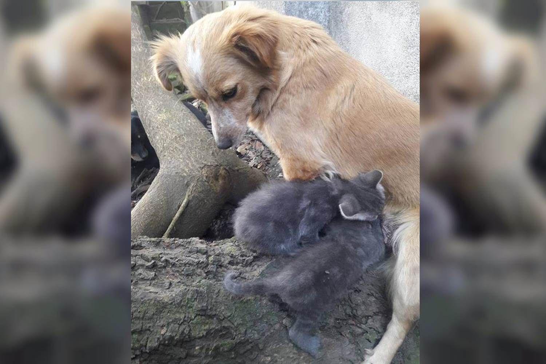 Una perra adoptó a dos gatitos abandonados recién nacidos