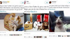 Los usuarios atestaron las redes de gatos para que no se difundiera información