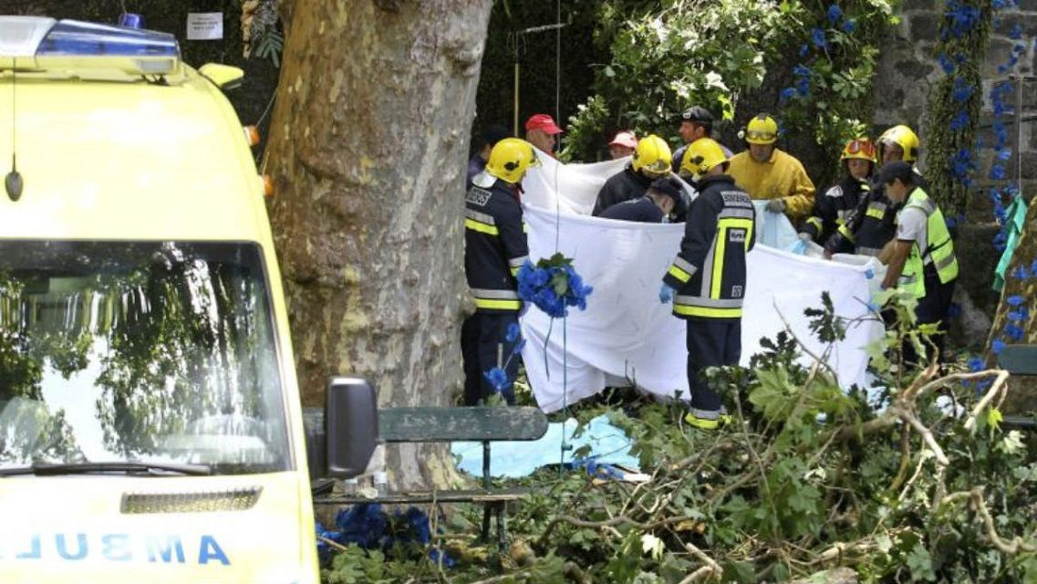 Cayó un árbol durante una misa y mató a 13 personas - Crédito: okdiario.com