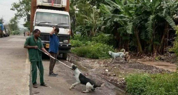Tuvieron que capturar a los perros para rehabilitarlos