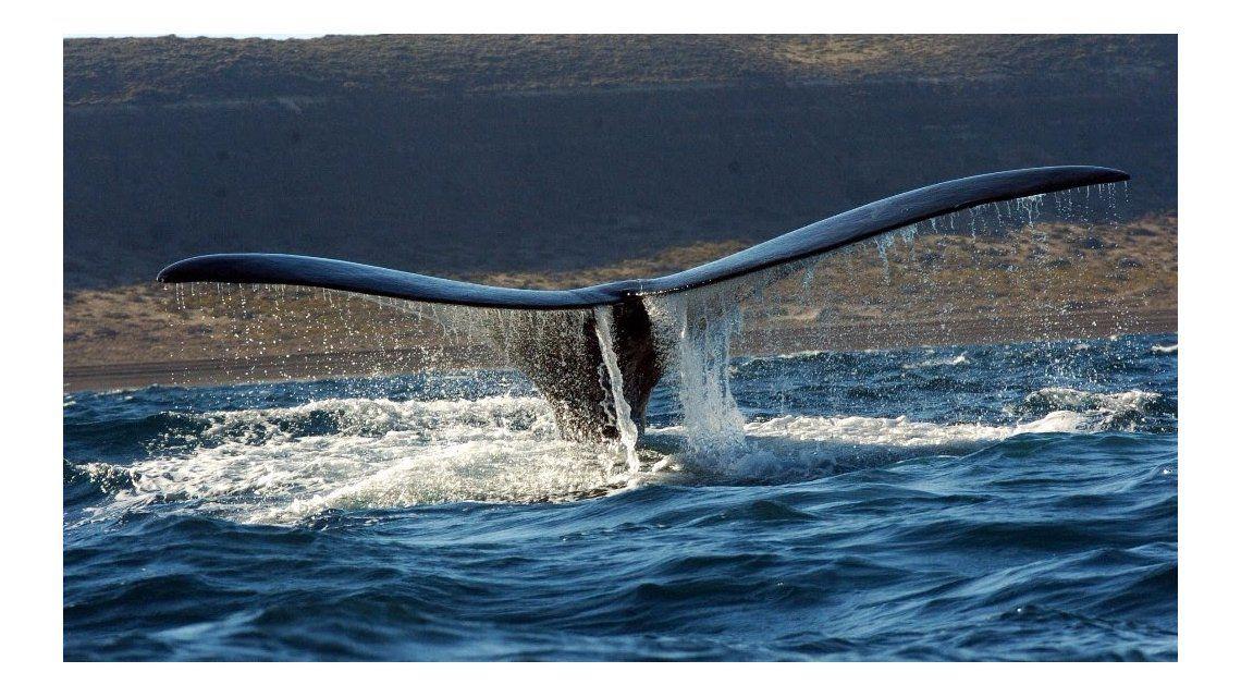 Ballenas en Puerto Madryn