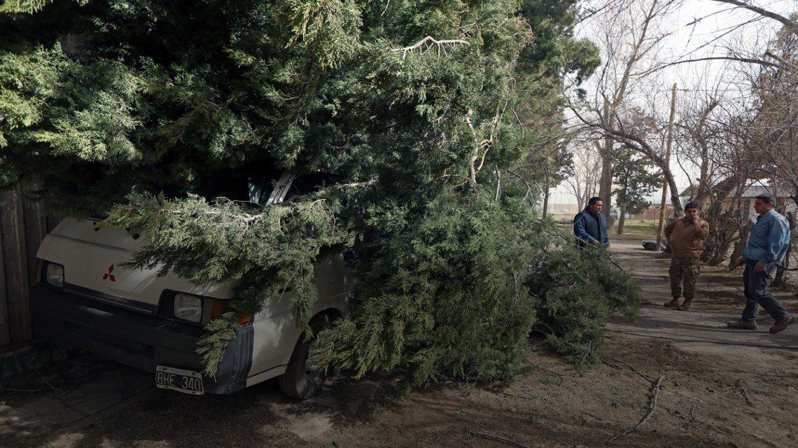 Los fuertes viento provocaron la caída de árboles