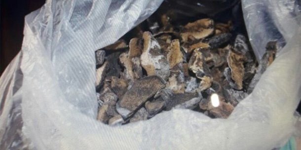 También se encontraron hongos alucinógenos y dos plantas de cannabis