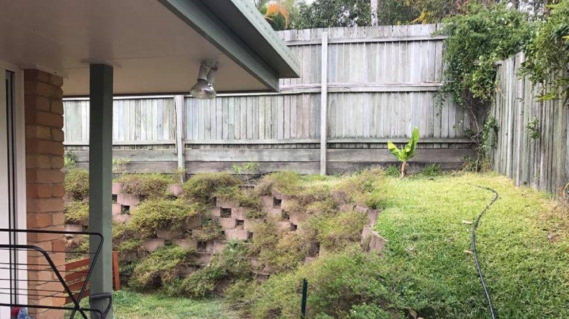 Encontrá la serpiente que está escondida en el jardín