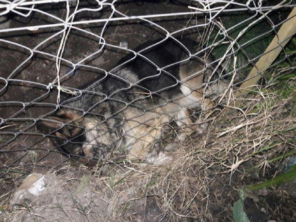 Hallaron más de 20 perros envenendados en Batán - Crédito: La Capital<br>