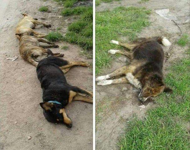 Hallaron más de 20 perros envenendados en Batán - Crédito: La Capital