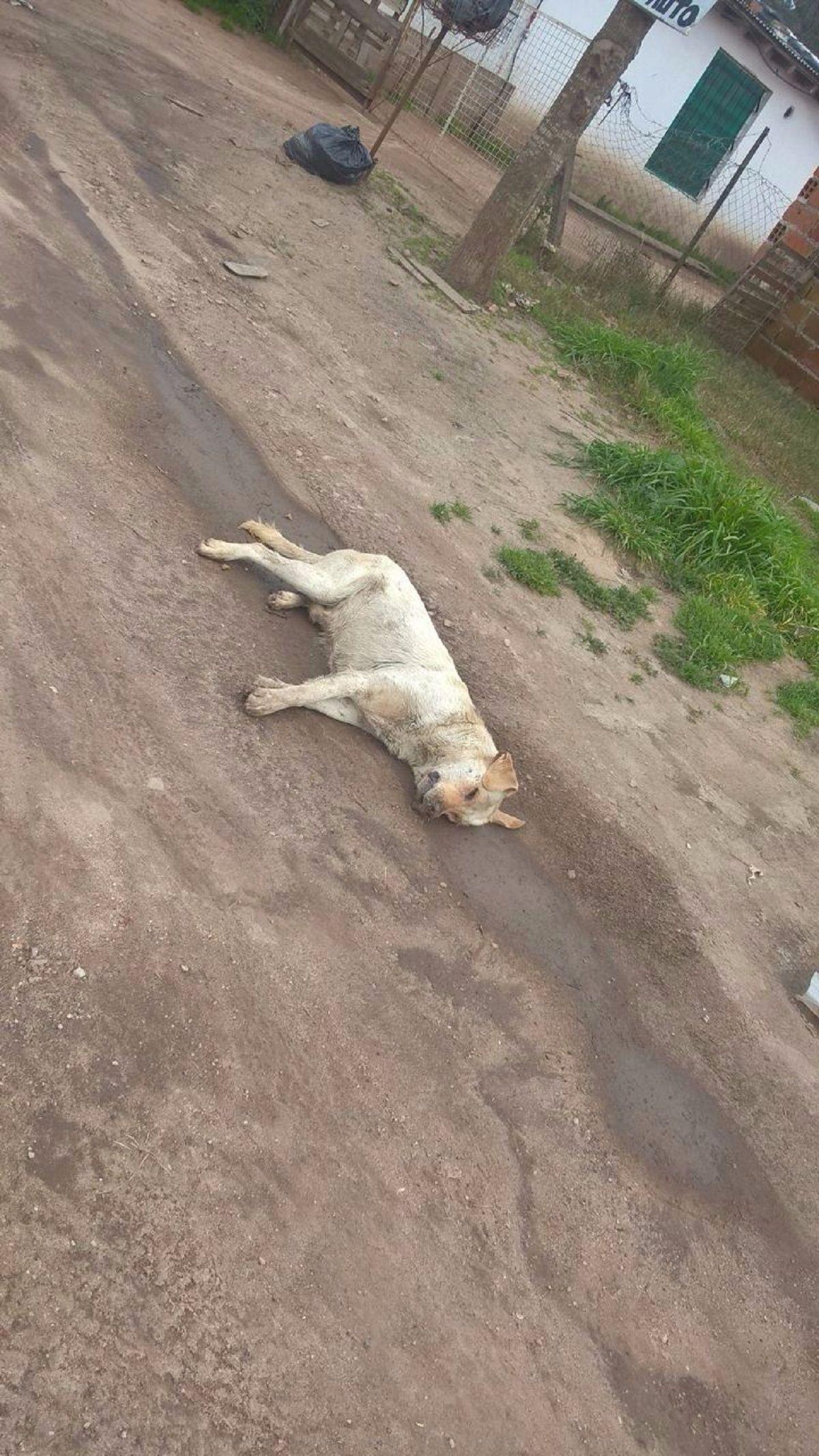 Hallaron más de 20 perros envenendados en Batán - Crédito: 0223