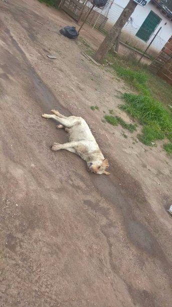 Hallaron más de 20 perros envenendados en Batán - Crédito: 0223<br>