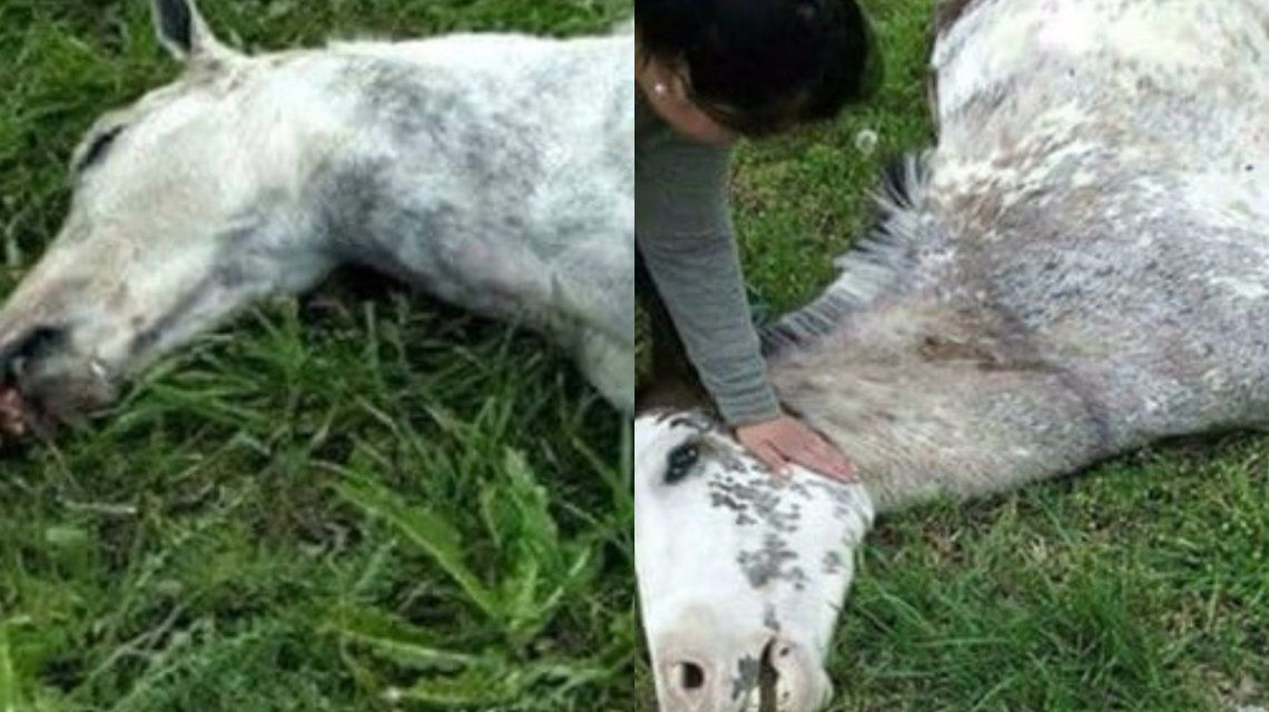 Polémica por la peregrinación gaucha en Luján: la Iglesia no quiere más caballos