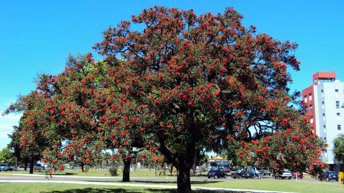 El árbol del ceibo
