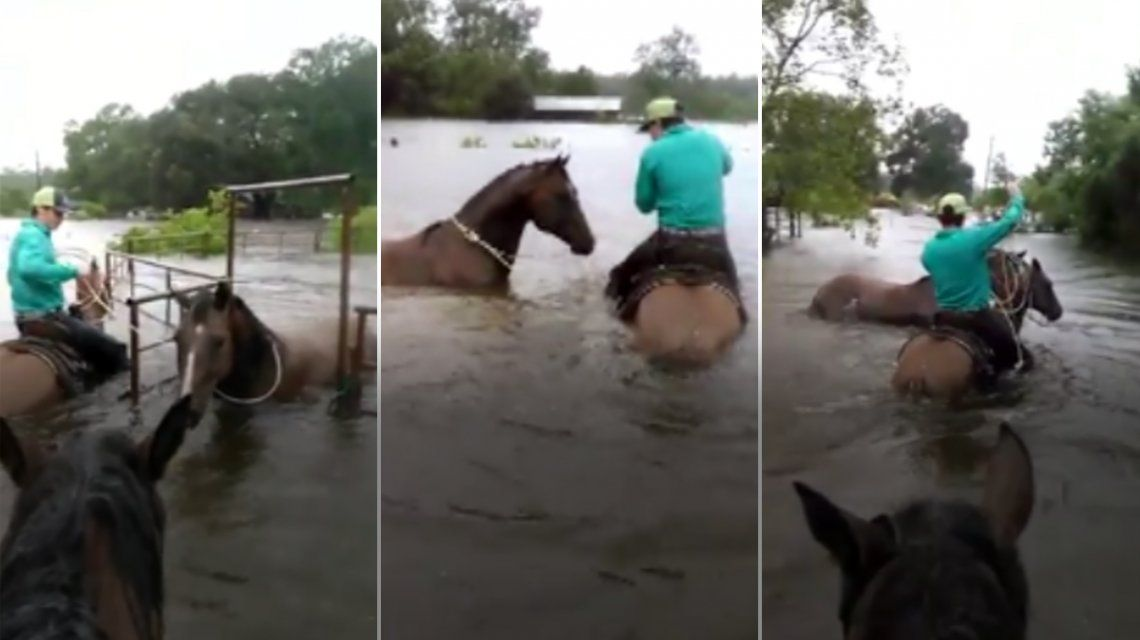 Mirá cómo un cowboy rescató a un caballo afectado por el huracán