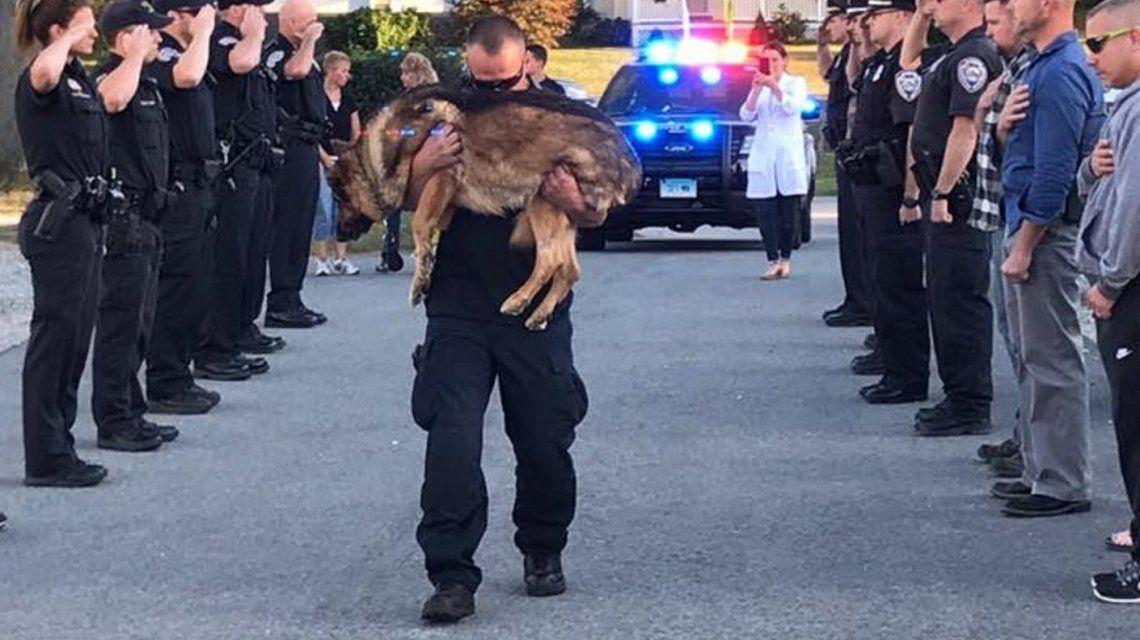 La conmovedora despedida a un perro policía con una enfermedad terminal
