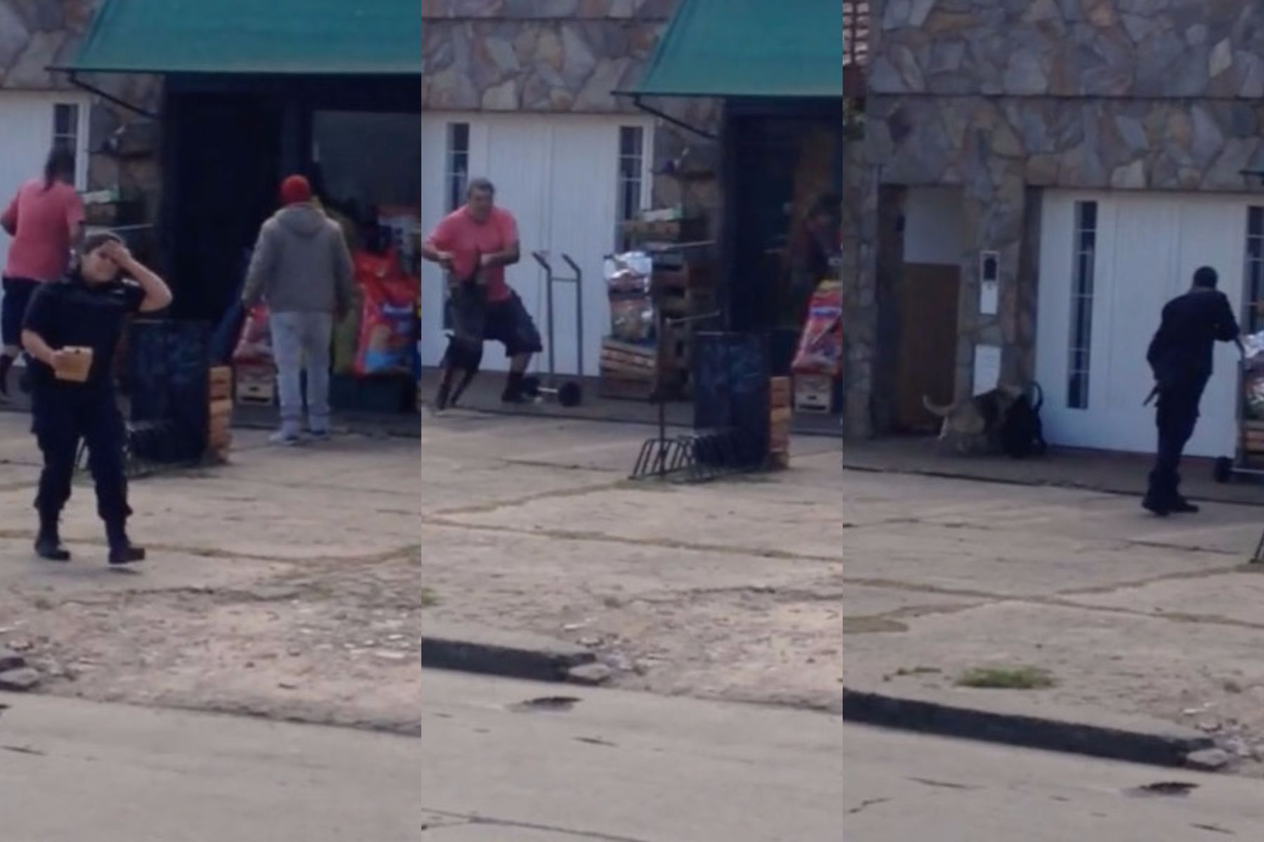 VIDEO: Un pitbull descontrolado atacó y mató a tres perros en La Plata
