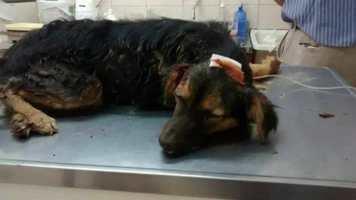 El perro fue rescatado pero murió en la veterinaria