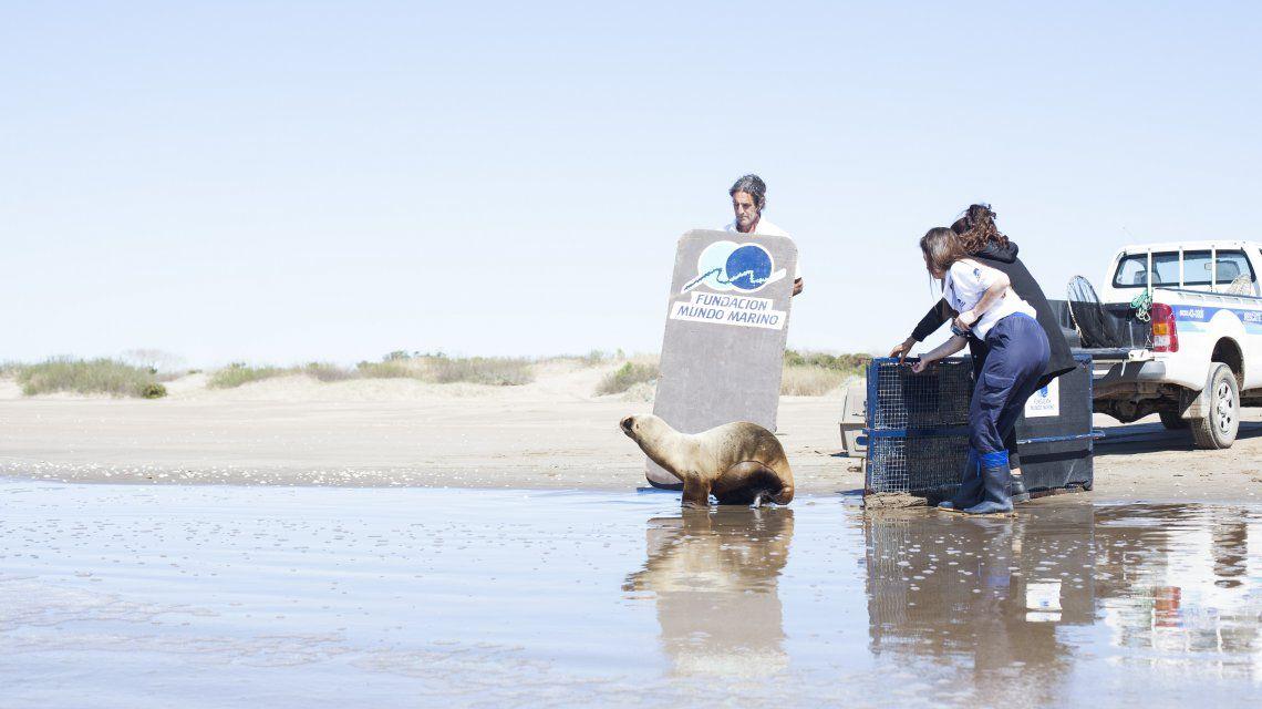 Una historia para no olvidar: el día que liberé a un león marino