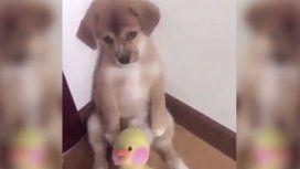 VIDEO: La tierna reacción de un perrito al ser retado que es viral en redes sociales