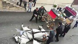 Un caballo muere mientras tiraba un carruaje por el calor
