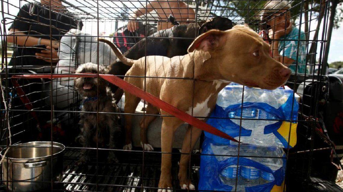 Quienes abandonaron a sus mascotas por el huracán Irma pueden ir presos