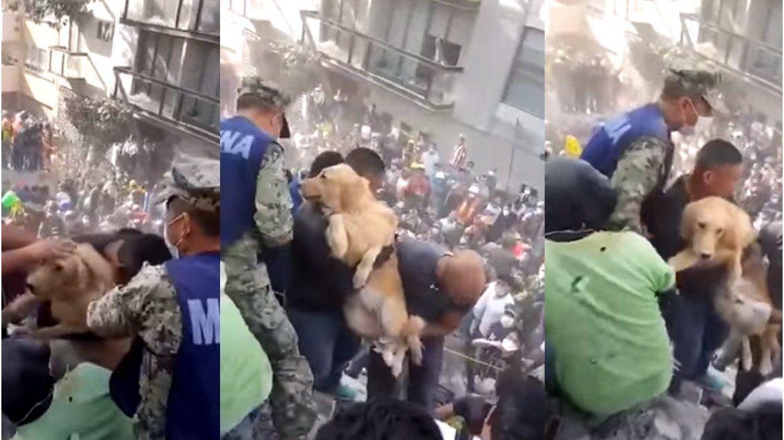 Emotivo rescate de un perro entre los escombros de Ciudad de México