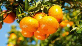 La mandarina que mató a una nena tenía un veneno prohibido
