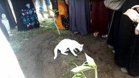 Un gato se niega a dejar una tumba en un funeral en Malasia