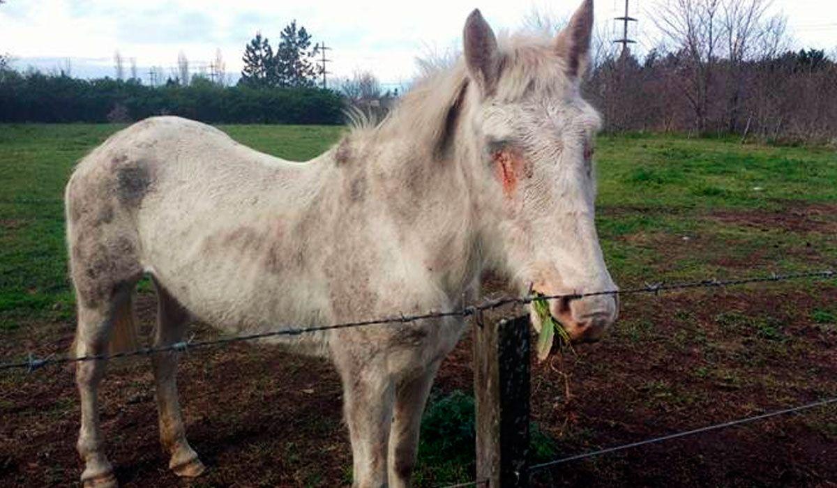 El animal ya fue trasladado para su recuperación