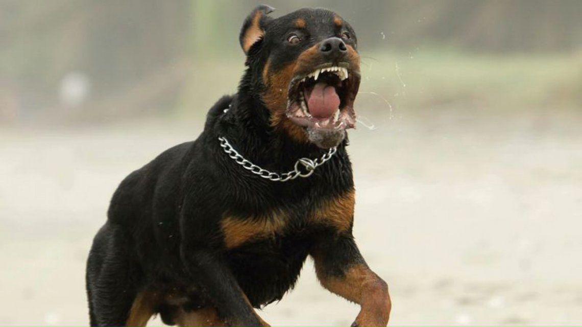 Rottweiler - Imagen ilustrativa