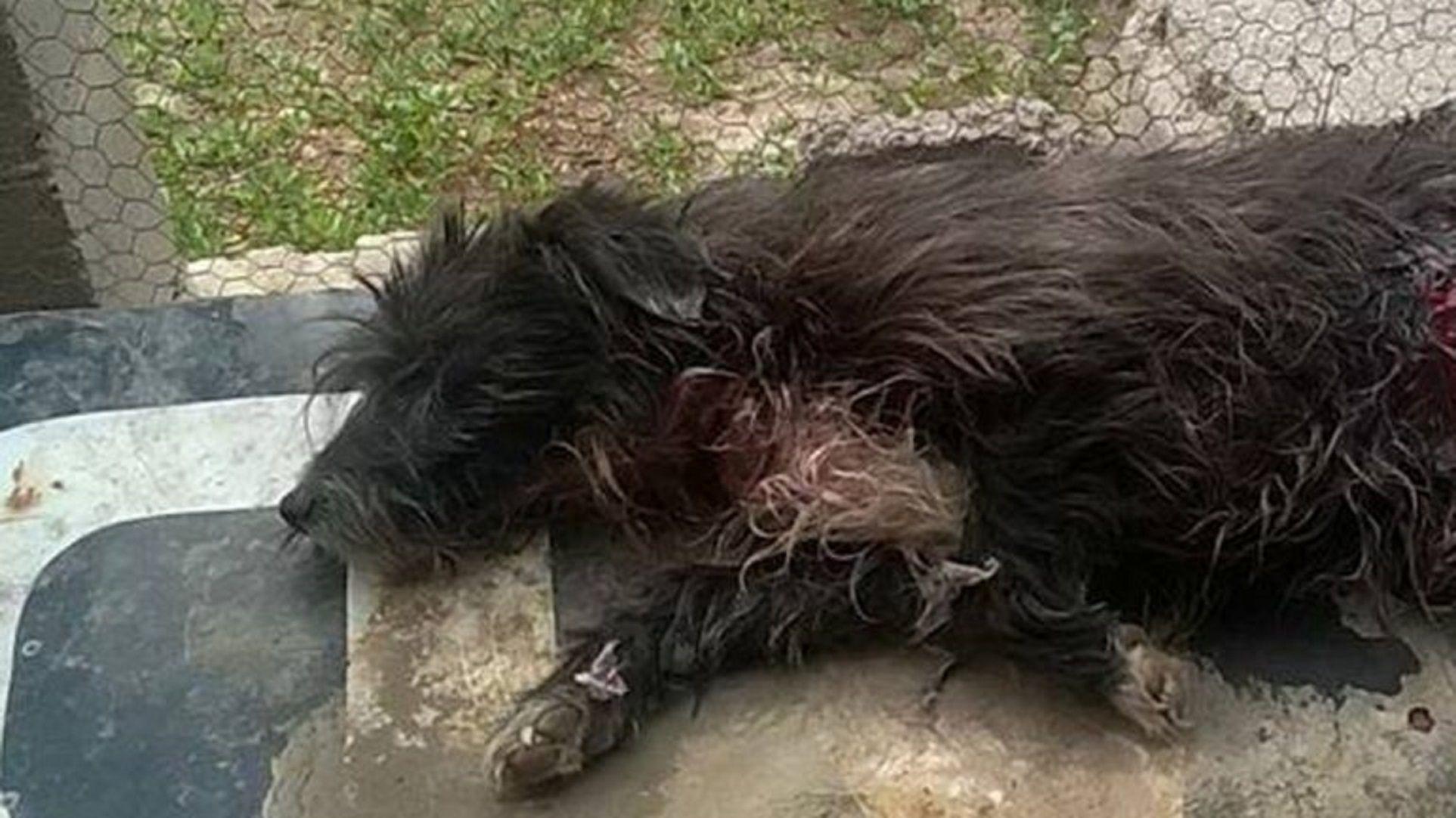 Un perro intentó proteger a su familia de una entradera y casi lo matan