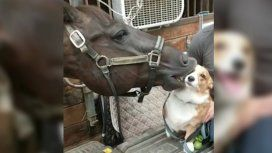 Phoenix no puede mantenerse lejos de su amigo, el perro Dezi